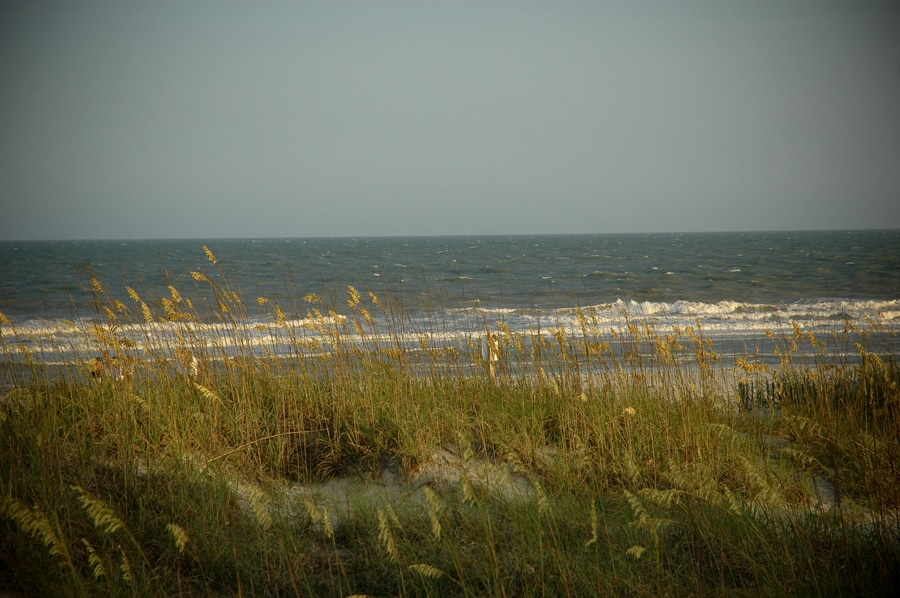 Dune habitat in Myrtle Beach, SC. Image courtesy of Michael McCarthy via the Flickr Creative Commons.