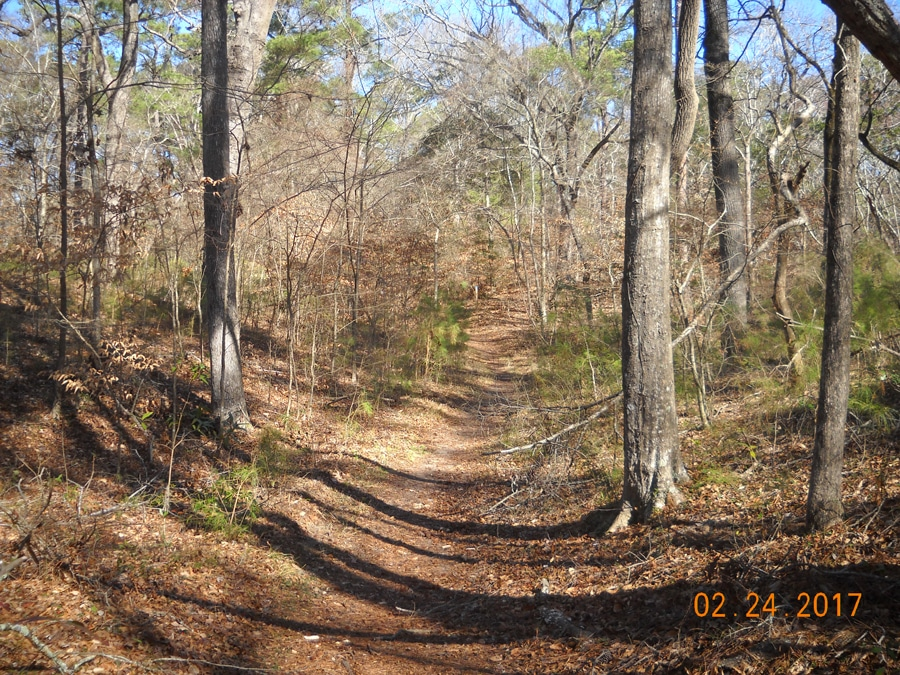 Path in Kitty Hawk Woods Reserve, an area credited for element 422.b. Deed Restrictions. Image courtesy of Ben Alexander, Town of Kitty Hawk.