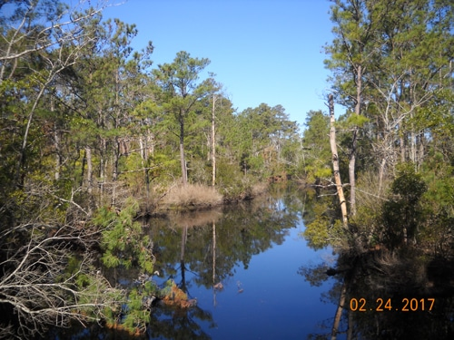 The Kitty Hawk Woods Reserve. Image courtesy of the Town of Kitty Hawk.