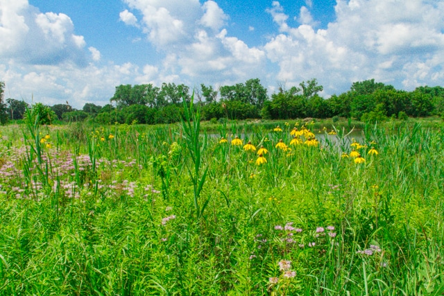 Flowering field protected as open space. Image courtesy of South Elgin, IL.